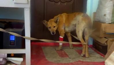 На Сахалине придумают, каксистемно поддерживать волонтеров, которые спасают животных