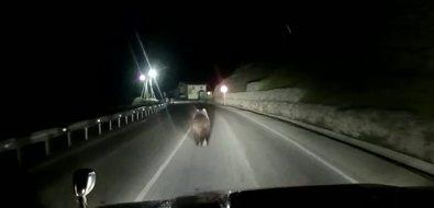 Испуганный автомобилем медведь устроил пробежку вцентре Курильска