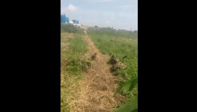 Житель Тараная опасается слива вреку отходов сместного свинокомплекса