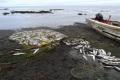 Десятки фактов незаконной добычи лососей пресекли сахалинские пограничники задве недели