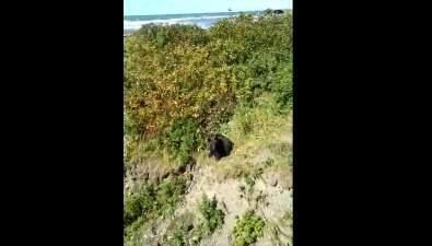 24 медведя пришлось отстрелить вСахалинской области сначала года