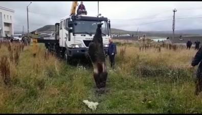 В Курильске возле детской школы искусств застрелили пятилетнего медведя