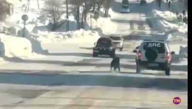 Сотрудника охинской полиции, тащившего собаку замашиной, привлекут кответственности