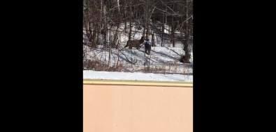 Из загона вСахалинском зоопарке сбежал олень