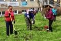 Больше 50 саженцев кустарников высадили вАниве горожане