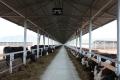 Впервые наСахалине построили фидлот длясодержания мясного скота