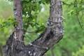 Мэрия Южно-Сахалинска запрещает подсветку деревьев, носама этим занимается