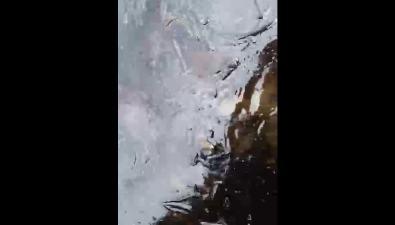 В районе Соловьевки берег залива Анива укрыло мазутом