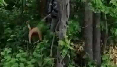 Долинские спасатели приехали накрик рыжего кота исняли егос дерева