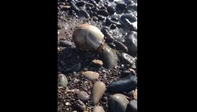 В Томари наберегу моря нашли череп человека