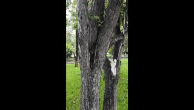 Мэрия Южно-Сахалинска ненашла нарушений вразвешенных надеревьях муниципальных гирляндах