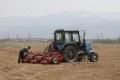 1184 гектара сахалинских полей засадили картофелем