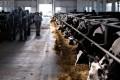 В Раздольном ненашлось мертвых коров, нообнаружились финансовые сложности