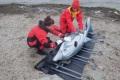 Северная июжная группы помощи морским млекопитающим провели совместную тренировку