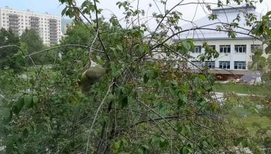 Зеленый иподвывающий— южно-сахалинская семья увидела изокна необычного голубя