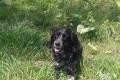В Холмске умерла домашняя собака, которую вовремя самовыгула избил неизвестный мужчина