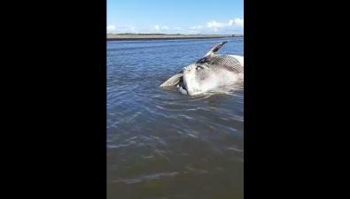 В шести километрах отПоронайска вморе плавает мертвый кит