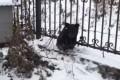 Стая псов напугала медвежонка вХолмске