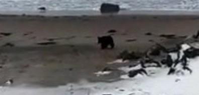 На Сахалине решают судьбу медвежонка-сироты