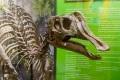 Реплика черепа сахалинского динозавра примет участие вДнях Дальнего Востока