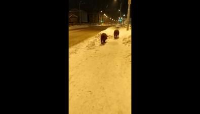 В Южно-Сахалинске вдоль дороги весь день гуляют свиньи