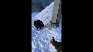 """В перенаселенный """"Пес икот"""" подбросили взрослых домашних собак"""