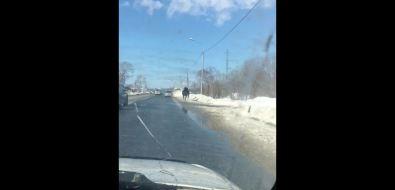 Лошади бегают поХолмскому шоссе