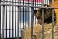 На Сахалине решают судьбу медвежонка-сироты, который проходит реабилитацию взоопарке