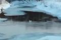 В Соколе заметили лебедя
