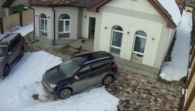 Стая бездомных собак растерзала домашнего той-терьера вЮжно-Сахалинске