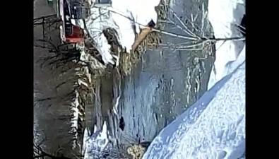 В Южно-Сахалинске наблюдают цапель
