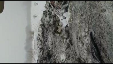 "Совхоз ""Корсаковский"" закопал трупы коров уреки вселе Чапаево"