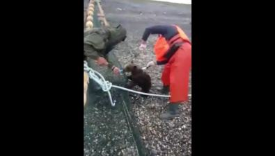 Сахалинские рыбаки спасли медвежонка изневода