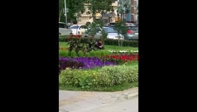 Южносахалинцев просят неворовать цветы сгородских клумб