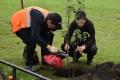 Школьники истуденты Поронайска посадили 12 кленов