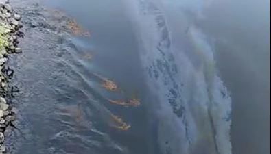 В реку уНевельска несколько дней сливалось топливо