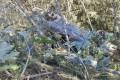 В Долинском районе иномарка вылетела сдороги