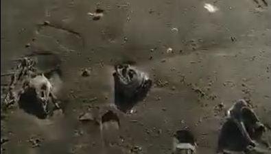 Побережье вМакаровском районе усыпано рыбьими головами