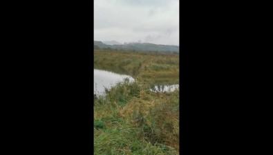 Экологи требуют проверить законность сжигания старых шпал вбухте Тихой