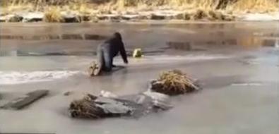 Молодой поронаец спас собаку изхолодной реки