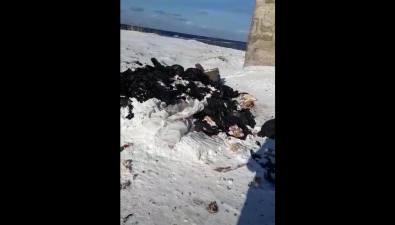 В пригороде Холмска обнаружена новая несанкционированная свалка