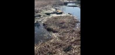 Мертвые животные разлагаются вреке нарадость кунаширским медведям