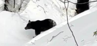 Медвежье семейство встретилось сахалинцам наХолмском перевале