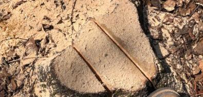 """""""Эковахта"""": вюжно-сахалинском парке снарушениями срубили около 200 деревьев"""