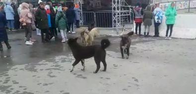 Бродячие собаки отмечали День Победы наглавной площади Долинска