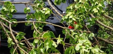 Циклон идет: вХолмске унесло металл скрыши, вЮжно-Сахалинске упало дерево