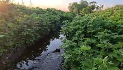 Вторую навозную реку обнаружили наСахалине