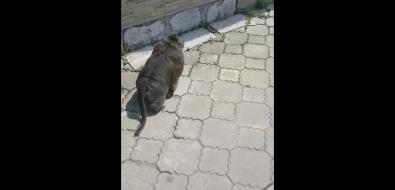 Обезьяна вальяжно гуляет поХолмску