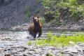 Какя встретил медведя