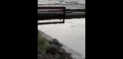 Жители Холмского района вновь пожаловались наубийство рыбы вреке Чеховке